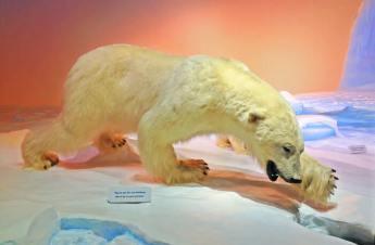 mamiferos museo de naturaleza canada